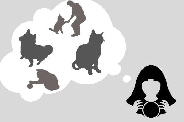 ペット霊視の視え方